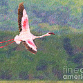 Lesser Flamingo Phoenicopterus Minor Flying by Liz Leyden