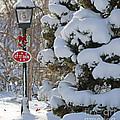Let It Snow by Jack Schultz