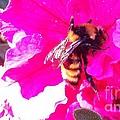 Let Me Be Pink by Laurrie Lloyd