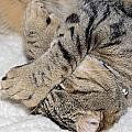 Let Me Sleep by Susan Leggett