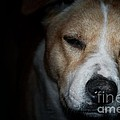 Let Sleeping Dogs Lie. by Tim Kravel