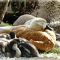 Let Sleeping Ducks Lie by Julia Springer