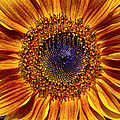 Let The Sun Shine In by Heidi Smith