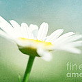 Let The Sunshine In by Kim Fearheiley