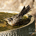 Let The Water Fly by Lori Tordsen