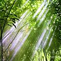 Let There Be Light by Chuck Kuhn