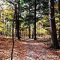 Let's Take A Walk In The Woods by Karen Majkrzak