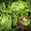 Lettuce Go Forward by Dee Flouton