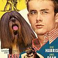 Lhasa Apso Art - East Of Eden Movie Poster by Sandra Sij