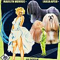 Lhasa Apso Art - The Seven Year Itch Movie Poster by Sandra Sij