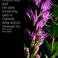 Liatris On Black II by Don Durante Jr