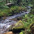 Liberty Creek 2014 #3 by Ben Upham III