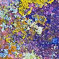 Lichen Abstract by Mae Wertz