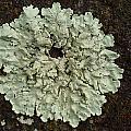 Lichen Circle by Michaela Perryman