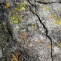 Lichen In Tricolour by Rebecca Hassinger