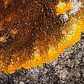 Lichen It by Bob Kemp