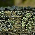 Lichen Macro I by Debbie Portwood