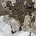 Lichen Mosaic by Bob Kemp