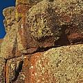 Lichen On Boulders by Kent Becker