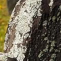 Lichen On Headstone by Allan Morrison