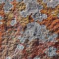 Lichen On Sandstone by Steven Ralser