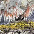 Lichen On Sea Beach Rock by Lee Serenethos