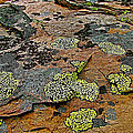 Lichens Along Trail To Plain Of Six Glaciers In Banff National Park-alberta-canada by Ruth Hager