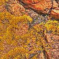Lichens On The Shoreline Rocks 2 by Gill Billington