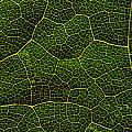 Life Grid In A Leaf by Cristina-Velina Ion