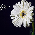 Life by Kim Andelkovic