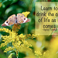 Life Lesson - As It Comes by Kerri Farley