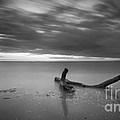 Life Of A Drifter Bw by Michael Ver Sprill