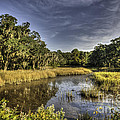 Life On The Marsh by Dale Powell
