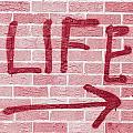 Life by Tom Gowanlock