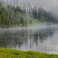 Lifting Fog On The Yellowstone River by Sandra Bronstein