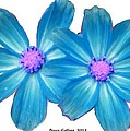 Light Blue Asters by Bruce Nutting