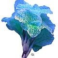Light Blue Iris by Bruce Nutting