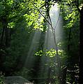 Light by Douglas Stucky