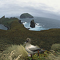 Light-mantled Albatross Bluffs Campbell by Tui De Roy