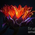 Light My Fire by Mitch Shindelbower