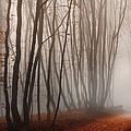 Light Path by Dobromir Dobrinov