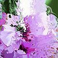 Light Pink Flower by William Durfey