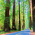 Light Through The Redwoods by Heidi Smith