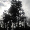 Light Through The Trees by Gav