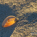 Light Within by Rima Biswas