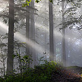 Lightbeams by Ingrid Smith-Johnsen