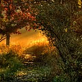 Lighted Path by Thomas Young