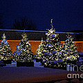 Lighted Trees With Snow by Nancy Mueller