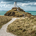 Lighthouse Path by Adrian Evans
