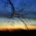 Lightning Branches by Neal Eslinger